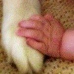 When Your First Born Isn't Your First Child: Introducing the Baby to the Dog