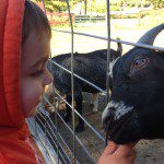Visiting With the Animals – Local Animal Exhibits