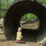 Summer Begins: Adventures at the Stamford Nature Center