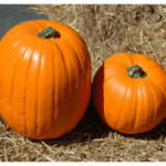 Perfect Pumpkins Around Fairfield County (and Beyond)