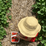 Pick Your Own Summer Fruit in Fairfield County