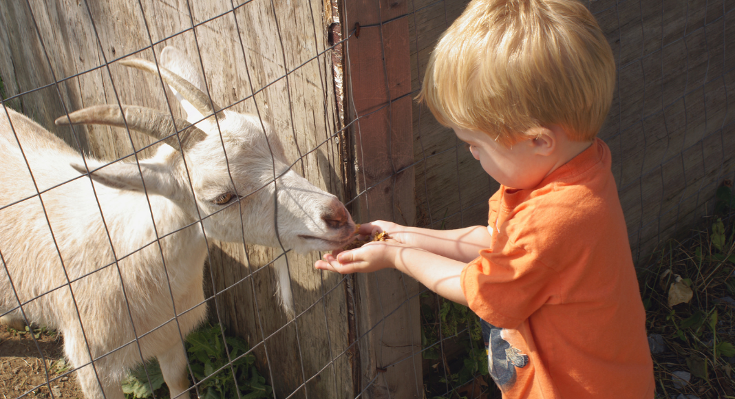 animal adventure day trips