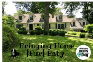 Bringing Home {Fur} Baby
