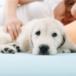 A Letter To My Dog Upon Baby's Arrival