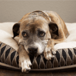Grieving the Loss of a Beloved Pet